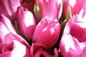 bouqet-fleurs-mamie